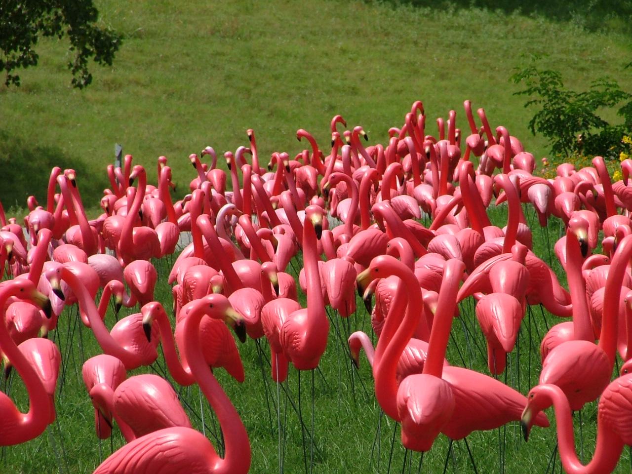 flamingo-1526694.jpg